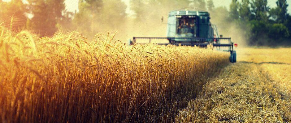 colheitaderia colhendo trigo